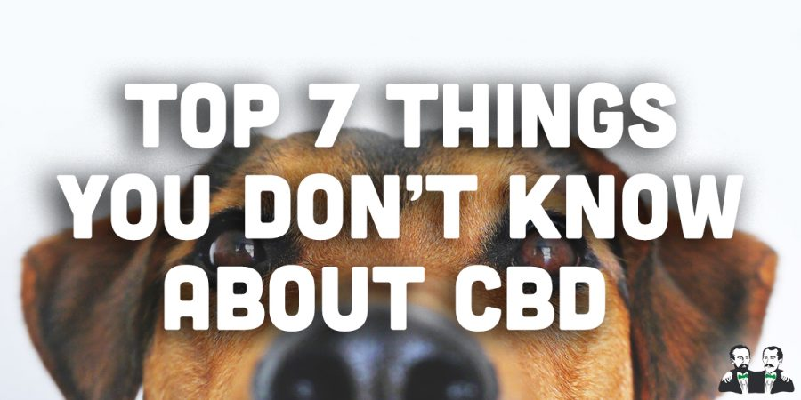 Top 7 Things You Didn't Know About CBD