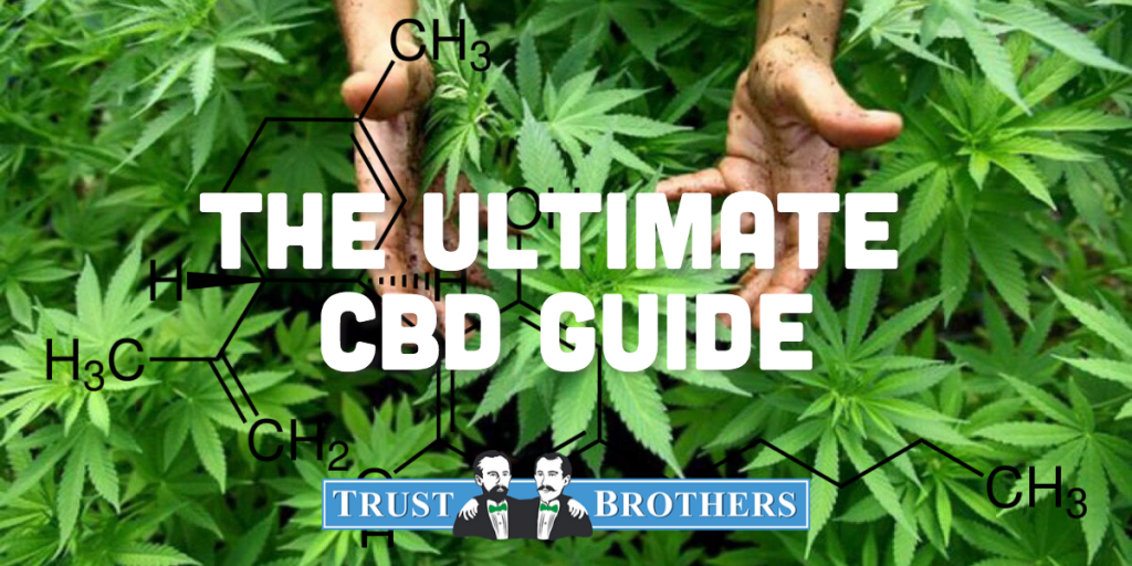 hemp plants cbd information